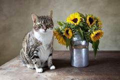 Sonnenblumekatze