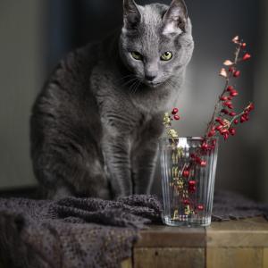 Stillleben mit der Katze